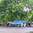Tree_crowd