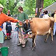 Cow_friends_10