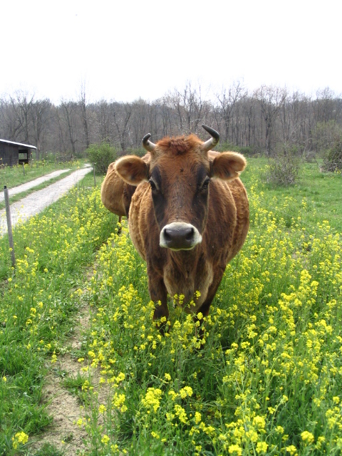 4.19.08 grazing 056