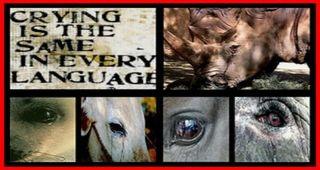 Crying_animals_big
