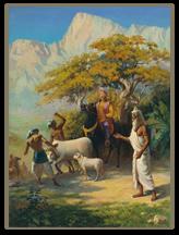 Brahmana_cow_low