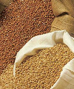 Feed-grains-250