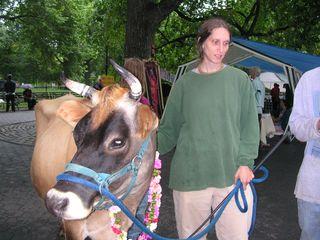Cow & Linda 2