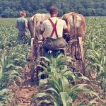 Corn-cultivator-O-1045-L