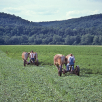 Mowing-alfalfa-O-373-L