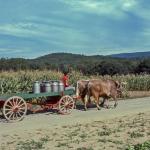 Milk-wagon-O-827-L