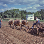 Potato-digger-O-436-L