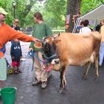 Cow & Friends 10