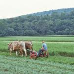 Mowing-alfalfa-O-871-L