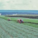 Mowing-alfalfa-O-890-L