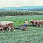 Mowing-alfalfa-O-885-L
