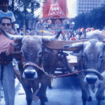 Oxen in DC Rathayatra