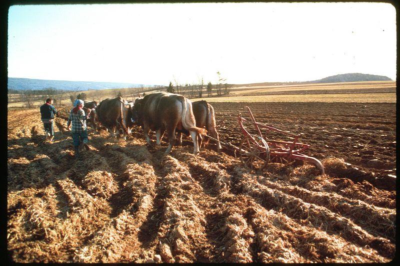 Plowing-in-tandem-O-774-L
