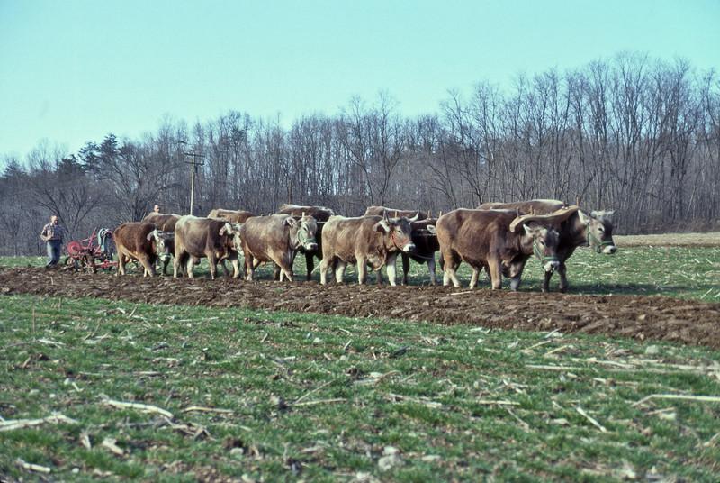 10-ox-team-plowing-O-973-L