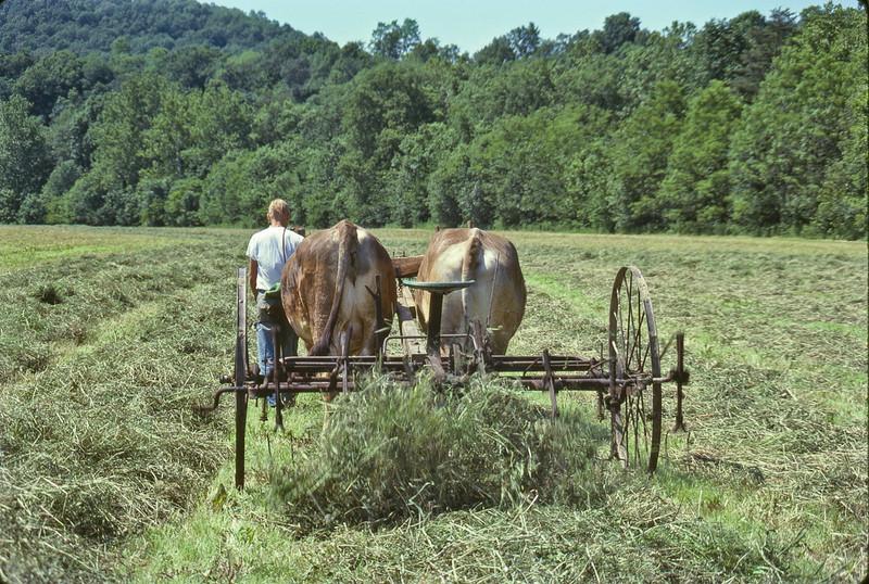 Hay-tedder-O-350-L