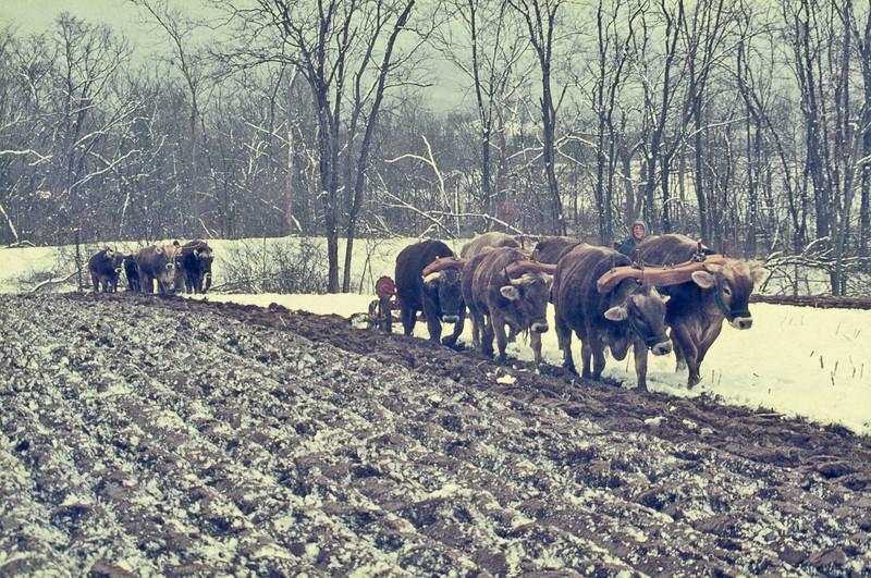 Snow-plowing-O-932-L
