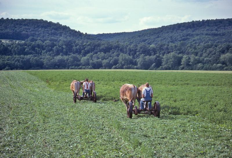 Mowing-alfalfa-O-844-L