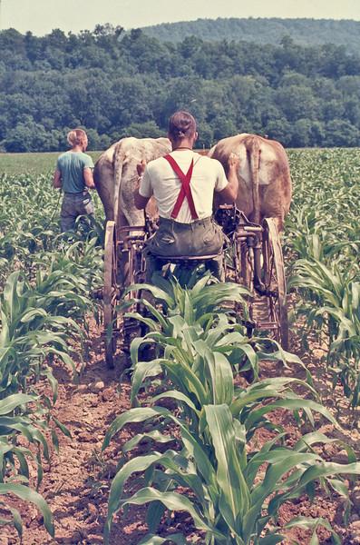 Corn-cultivator-O-1047-L