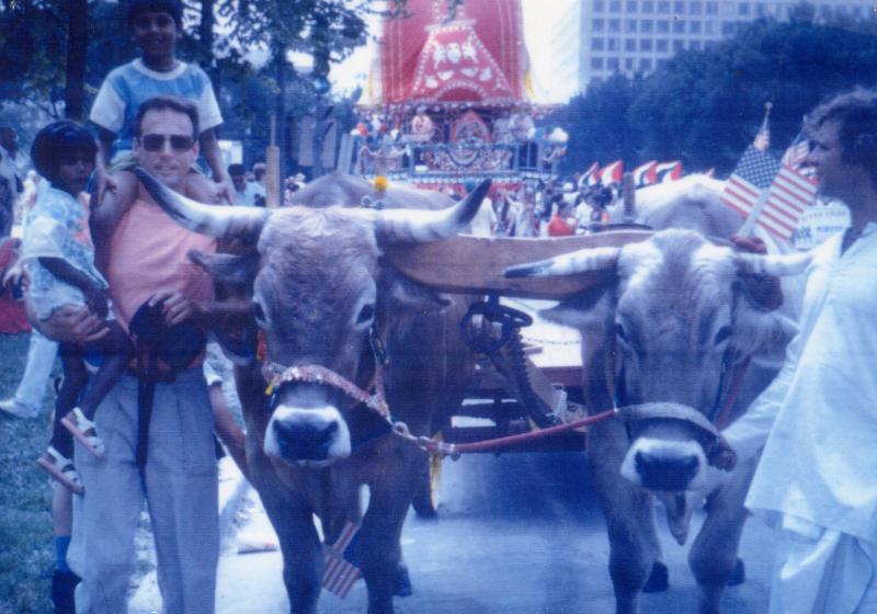 Oxen in DC Rathayatra