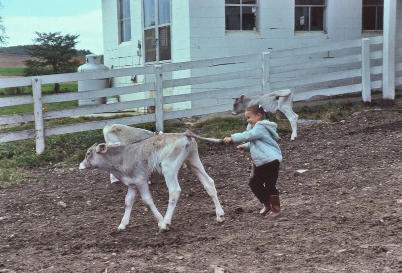 Bull-calf-and-Jahnava-81-51-L