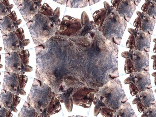 3.21.07 031 fractal