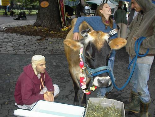 Cow_friends_3