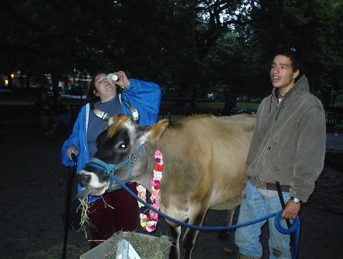 Cow_friends_4_2