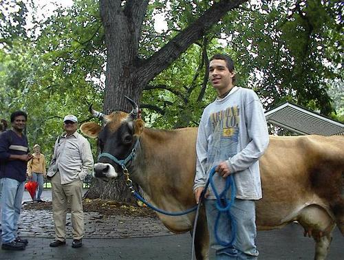 Cow_with_jason_2