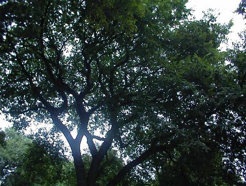 Sp_tree_2