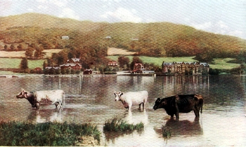 LAKE WINDERMERE WITH COWS.