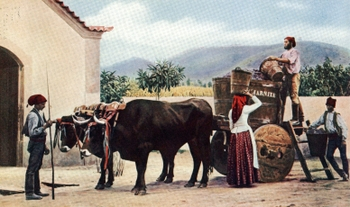 OXEN WITH DECORATED YOKES.